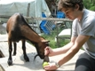 Photo: Henry devouring an apple, with my help (August 2011)
