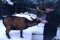 Photo: Henry eats a banana skin in the snow (January 2010)